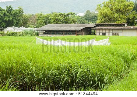 Agricultural Shed And Green Crops Field