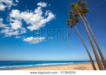 Newport beach California three palm trees group on shore
