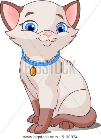Cute Cat pointed siamese. Beautiful Vector illustration poster