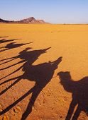 Riding Camels on Zagora Desert in Morocco Africa poster