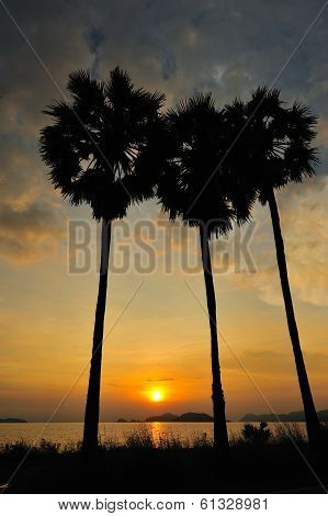Coconut Tree During Sunset