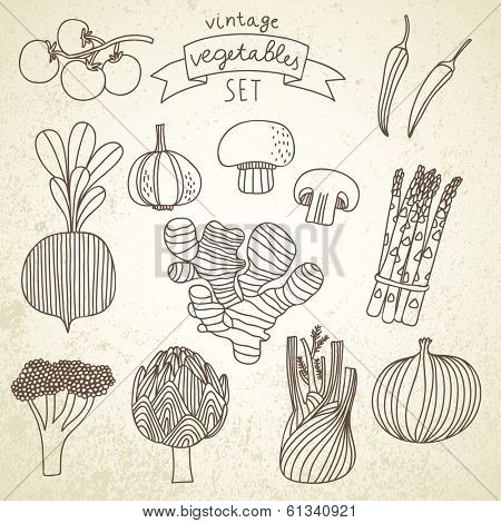 Tasty vegetables in vector set - cherry tomato, chili, garlic, champignon, onion, ginger, fennel, asparagus, beet, broccoli, artichoke. Vintage vegetarian concept collection