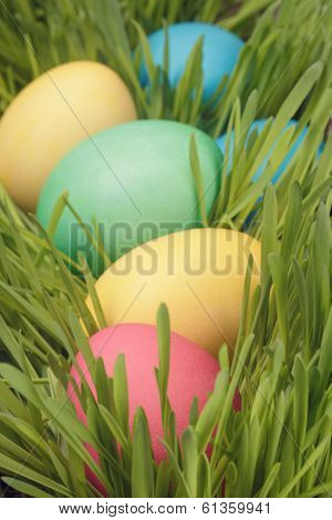 Easter Eggs Hiden In Grass Close Up Photo