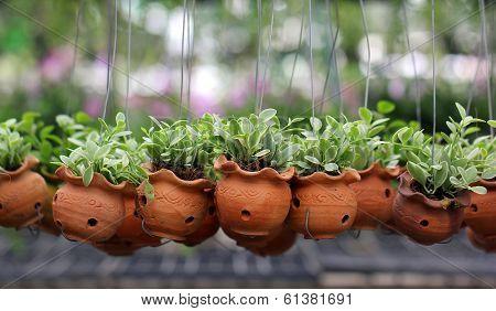 Dischidia nummularia climb or green creeper plant poster