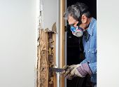 Man prying sheetrock and wood damaged by termite infestation in house. poster