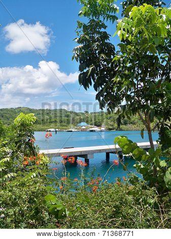 View of Mahogany Bay through the trees