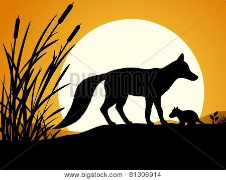 Silhouette of the fox.