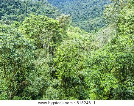 Green Rainforest Jungle Area