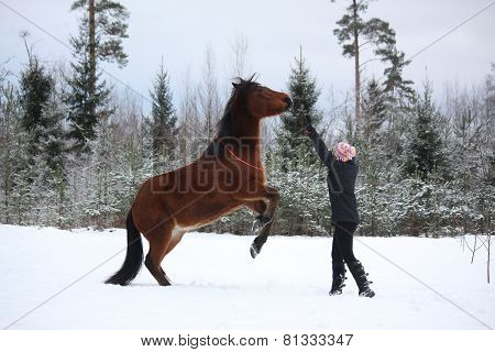 Teenager Girl Commanding Bay Horse To Rear