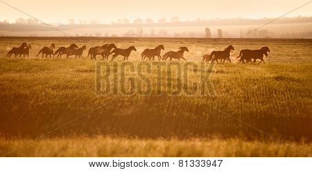 Herd of horses gallop across an open field in the sunshine.
