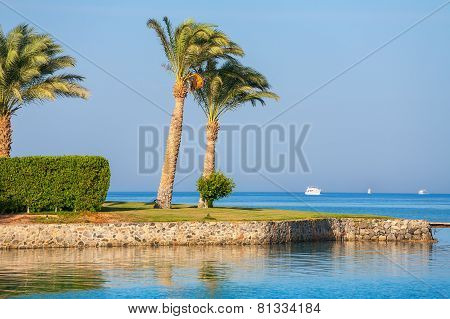 Red Sea Coast. Egypt