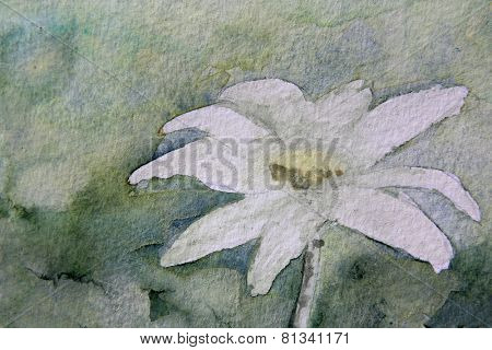 Shades of Green Flannel Flower