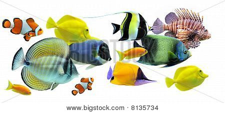 group of fishes on a white background poster