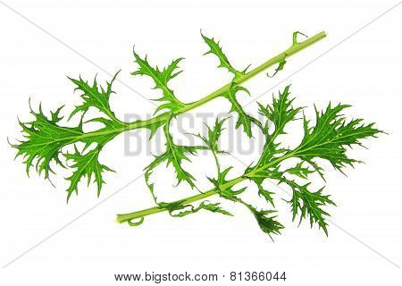 Mizuna Salad Leaves