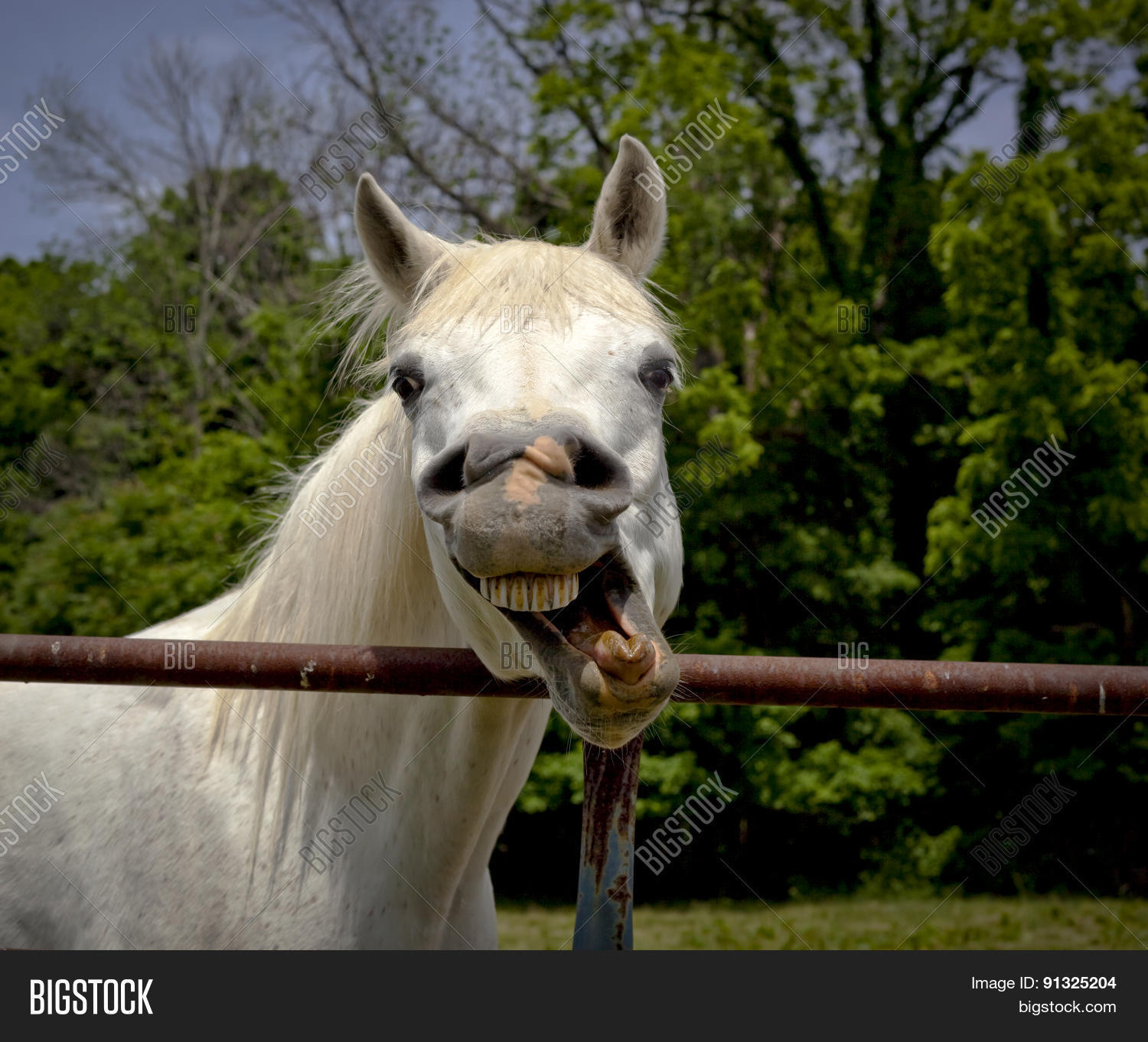 Funny Horse Making Image Photo Free Trial Bigstock