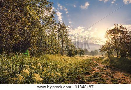 Landscapes Colors  Woodland Summer Non-urban Nature Sunlight