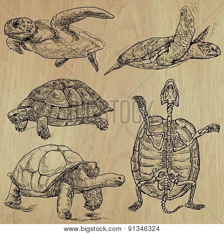 Turtles - An Hand Drawn Vector Pack