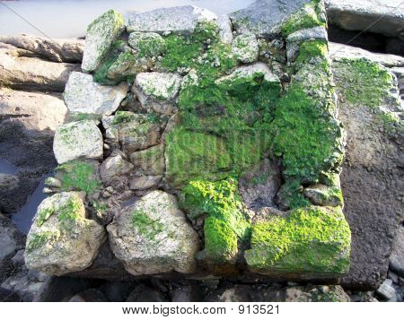 Coast Rocks With Moss
