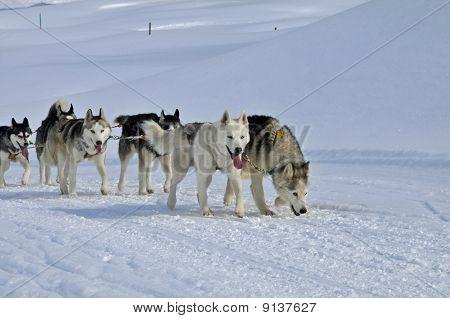 Huskies Racing