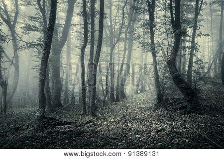 Trail Through A Mysterious Dark Forest In Fog