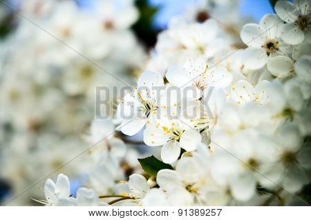 Beautiful White Flower With Amazing Blossoms