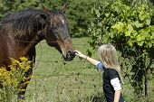young girl petting contented horse on the nose through fence on country lane. poster