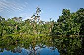 Beautiful landscape of nature reflected in amazon rainforest river, Yasuni National Park, Orellana, Ecuador poster