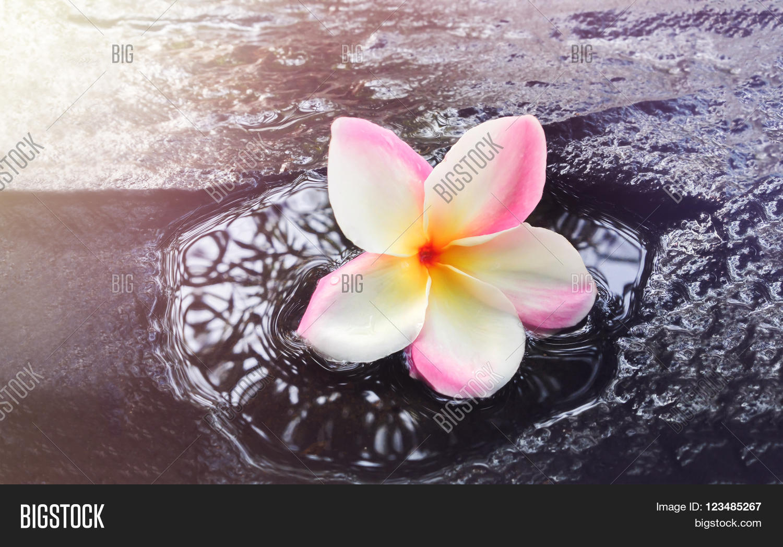 Beautiful single image photo free trial bigstock beautiful single flower plumeria or frangipani on waterfall rock in dreamy feeling backgrpund with copy space izmirmasajfo