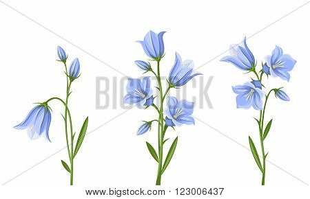 Vector set of blue bluebell flowers isolated on a white background.
