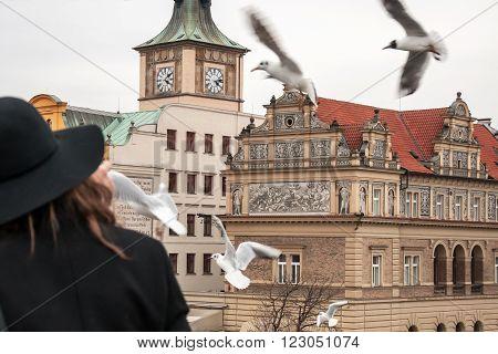 Black-headed gull flies around the Charles Bridge in Prague, Czech Republic