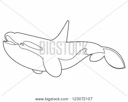 vector illustration of a killer whale on white background with black outline for kids and coloring book