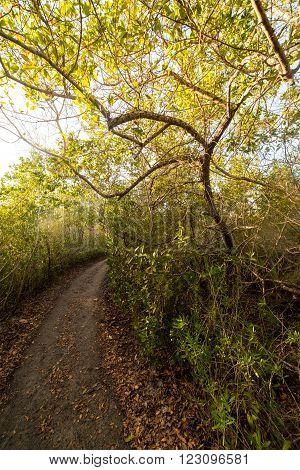 A trail on a small island near west coast Florida