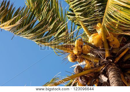 Coconut tree at Virginia Key Beach in Miami