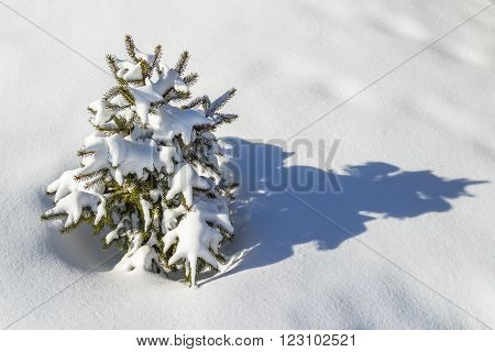 Small decorative tree in the back yard under the snow