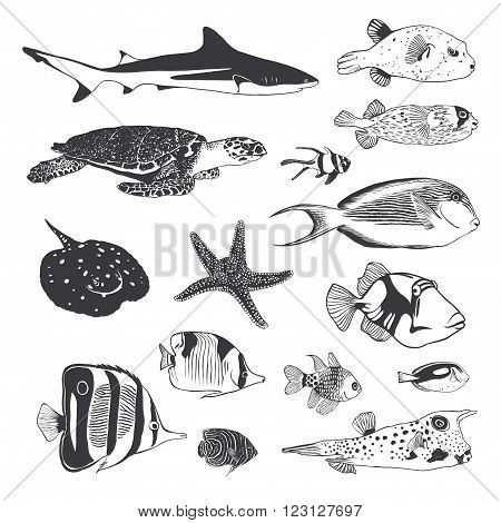 Vector Black and white Collection of sea and ocean inhabitants. Fish shark turtle.