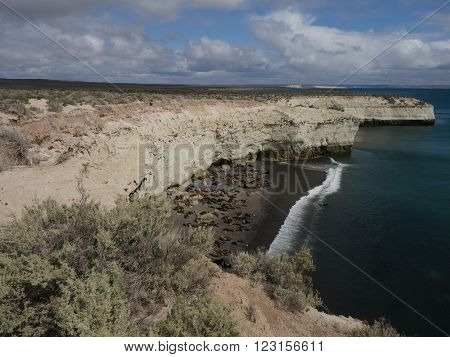 Colony of South American Sea Lion - Otaria flavescens. Seen at Punta Tombo Patagonia Argentina