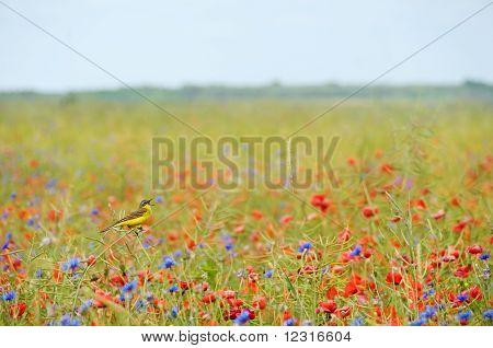 Small Songbird In Wild Flowers