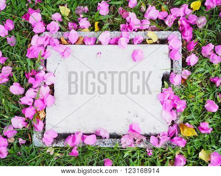 Blank concrete cap drain on grass and pink flower (Bougainvillea) dropped in the park