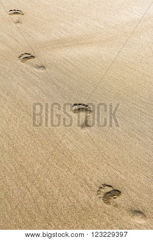 Closeup of Footmarks on the golden sandy beach