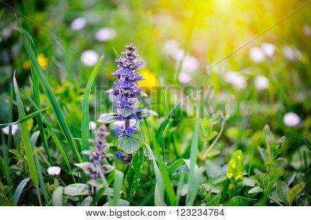 Spring meadow with flowers close. Natural background