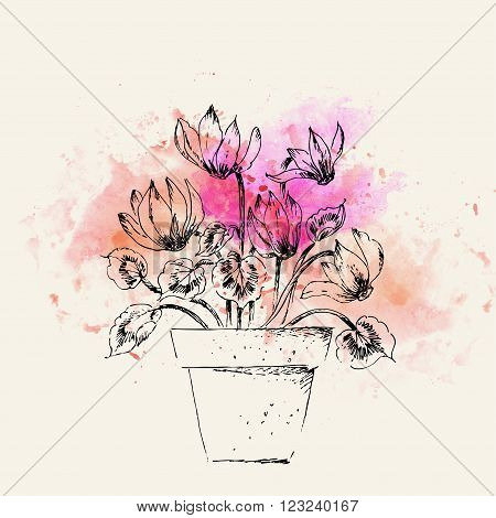 Hand drawn line art pot cyclamen flower and on pink watercolor splash. Spring cyclamen ink drawing for easter decor garden backgrounds floral design.