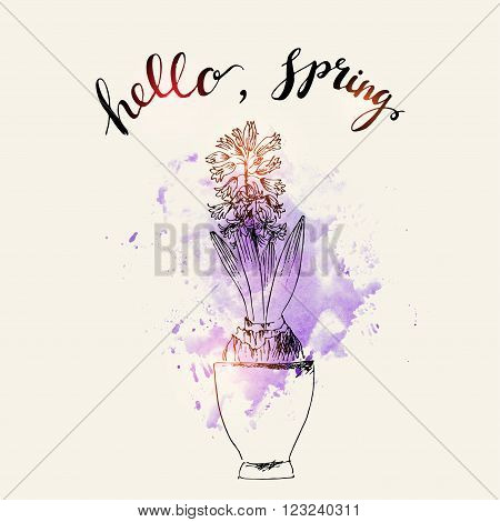 Hand drawn line art pot hyacinth flower and hello spring lettering on purple watercolor splash. Spring hyacinth ink drawing for easter decor garden backgrounds floral design.
