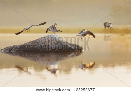 landscape with a lake and seagulls and deer