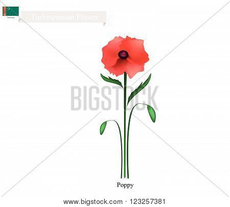 Turkmenistan Flower, Illustration of Red Poppy Flower. One of The Most Popular Flower in Turkmenistan.
