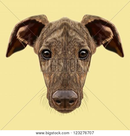 Cute face of fawn brindle domestic dog on yellow background