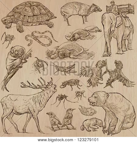 ANIMALS around the World. Description - Hand drawn vectors freehand sketching. Editable in layers and groups. Background is isolated. All animals are named inside the vector file.