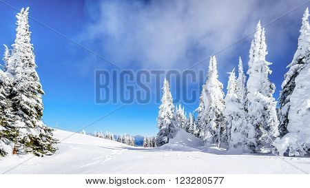 Wide snowfields, snow covered trees and deep snow pack in the high alpine ski area at Sun Peaks in the Shuswap Highlands of central British Columbia, Canada