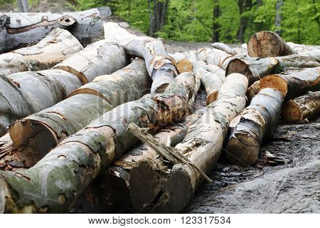 a trees   logging , felling of trees  , the lumber industry