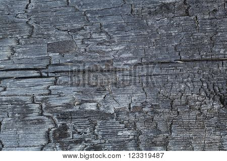 burnt wood texture close-up background of charred wood