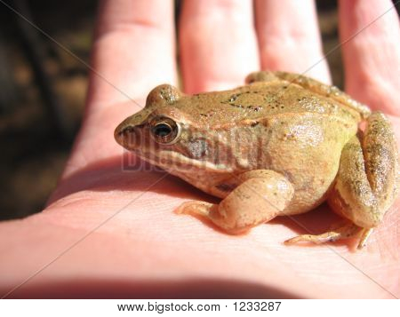 Frog On A Hand
